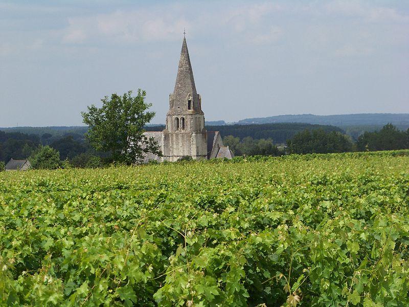 Vue sur la vieille église de Souzay-Champigny près de Saumur 49 Maine et Loire, Pays de la Loire. Photo prise de la parcelle du Clos d'Entre les Murs du Père Cristal (classée au monuments historiques), Château de Parnay.