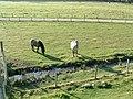 Deer transport. - geograph.org.uk - 263155.jpg