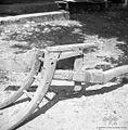 Detajl pluga brez lemeža od zadaj, Korita 1957.jpg