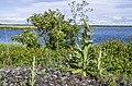 Deviņvīruspēks Liepājas ezera krastā. - panoramio.jpg