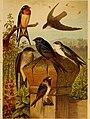 Die Nordamerikanische Vogelwelt (1891) (14748740484).jpg