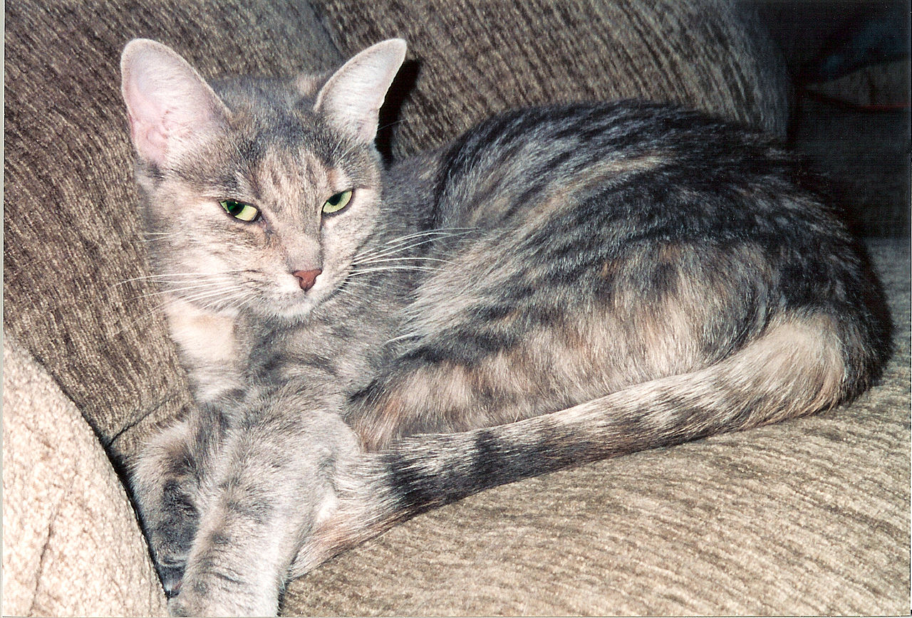 cat rescue san diego