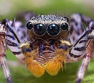 species of arachnid