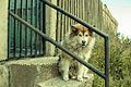 Dog of Punta Arenas.jpg