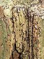 Doornse Gat Mierennest in een boomstronk 2.JPG