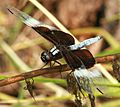 Dragon Fly (2649931005).jpg