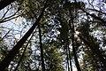 Dundas forest (7144013923).jpg