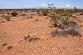 East of the Black Range - Flickr - aspidoscelis (2).jpg