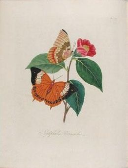 Книга An epitome of the natural history of the insects of China
