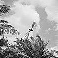 Een watermolen op Curaçao, Bestanddeelnr 252-7311.jpg