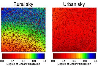 Skyglow - Skyglow is mostly unpolarized, and its addition to moonlight results in a decreased polarization signal.  Humans cannot perceive this pattern, but some arthropods can.