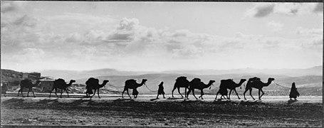 Egyptian camel transport passing over Olivet, 1918 LOC matpc.14760.jpg
