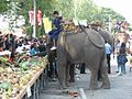 Elephant breakfast 2004.jpg