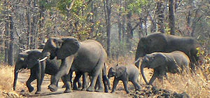 Wildlife of Malawi - Elephants in Liwonde National Park