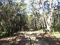 Engadine NSW 2233, Australia - panoramio (159).jpg