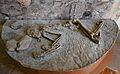 Enterrament de la sitja 16, barranc de Beniteixir, Museu Arqueològic de Gandia.JPG