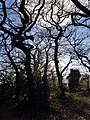 Epping Forest 20180125 150023 (49374092268).jpg