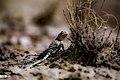 Eshtehard Desert 13960304 16.jpg
