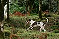 Eskdale and Ennerdale Foxhounds (31181583345).jpg