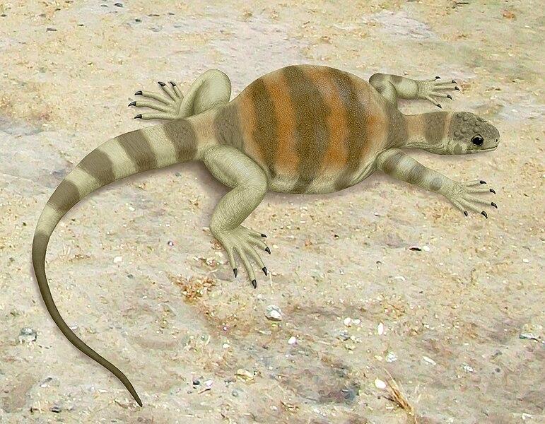 File:Eunotosaurus africanus.jpg