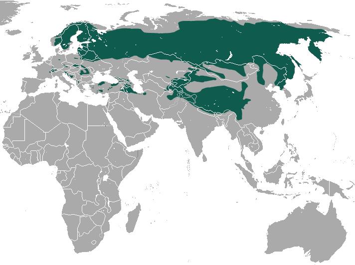 Eurasian Lynx area