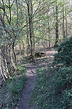 FFH2428-393 VS2428-492 Mixed forrest at slope.jpg