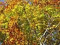 Faget forest (3043458130).jpg