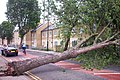 Fallen Tree Abbotts Road June 2004 - geograph.org.uk - 941694.jpg