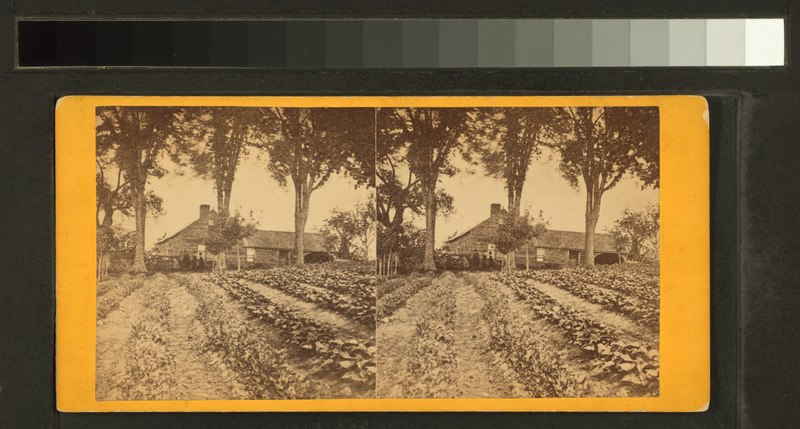File:Farm house and rows of potatoes(-) (NYPL b11708949-G92F132 032F).tiff