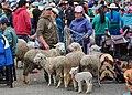 Feria de ganado, Biblián 03.jpg