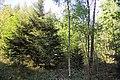 Feuchtgebiet Oberholz I 03.jpg