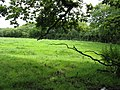 Field By The Muddy Horror - geograph.org.uk - 1413060.jpg
