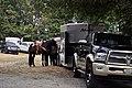 Fiestas Patrias Parade, South Park, Seattle, 2017 - preparing the horses 08.jpg