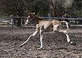 Finn foal 2.jpg