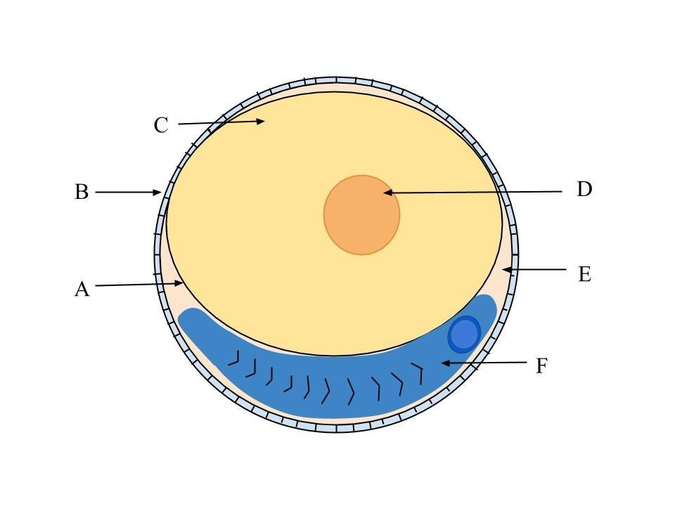Fish Egg Diagram (1)