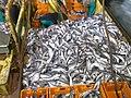 Fish aboard trawler African Queen-5.jpg