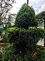 Flora at Munnar Rose Gardens 4.jpg