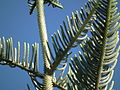 Flora of Tanzania 0178 Nevit.jpg