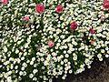 Flower-center135739.jpg
