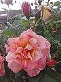 Flower Dortmund 13.jpg