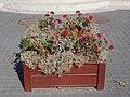 Flower box, Kossuth Square, 2018 Karcag.jpg