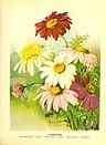 Flower grower's guide (1898) (14783759635).jpg