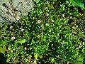 Flowers, from Rize DSC06948.JPG