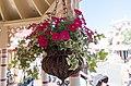 Flowers - Carnation Cafe.jpg