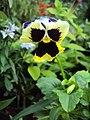 Flowers - Uncategorised Garden plants 177.JPG