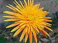 Flowers 45 78.jpg