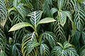 Foliage (26533408666).jpg
