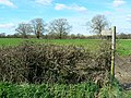 Footpath, south-west of Castle Cary - geograph.org.uk - 732453.jpg