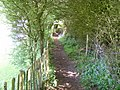 Footpath in a Hedge - geograph.org.uk - 1313219.jpg