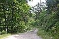Forêt domaniale des Fanges (3).jpg